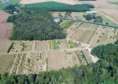 Hubbard Road Tree Farm